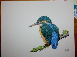 Common Kingfisher by dareith