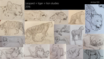 Leopard + Tiger + Lion Studies by Amber100