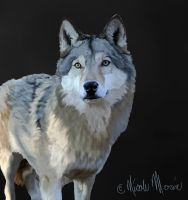 Wolf by NicoleRylie
