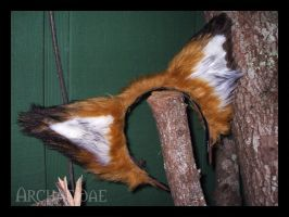 Red Fox Ears by Archaeidae