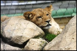 Lazy Cub by Arwen91
