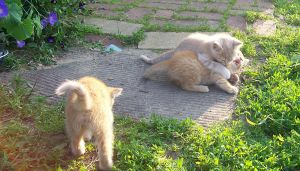 Kittenses 02 by Empy-Stock