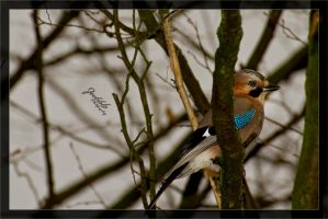Jay hiding by deaconfrost78