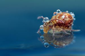 Springtail Reflection 5 by Alliec