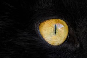 In the eye of a tiger by PaVet-Photography