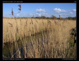 IMPRESSIONS OF NATURE 003 by Bispro