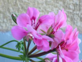 8. pink flowers by dusty-books
