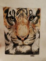 Tiger Face by Jaylynessa