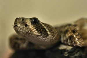 pit viper 2 by JSF1