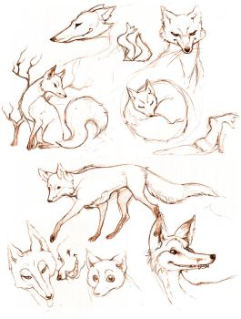 Foxy Sketches by pageboy