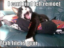 Lolcat: REMOET by LE-the-Creator
