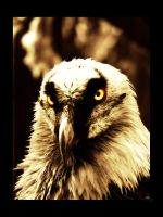 Vulture Portrait by Elvazur