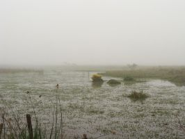 Mist_swamp by Manwathiell-Stock