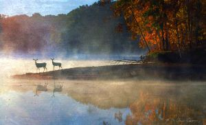 doe  fawn foggy fall morning by bierjaeger