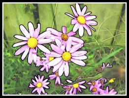 Purple Daisies by Tielle