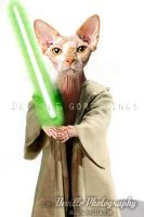 Yoda Sphynx Cat by DevillePhotography