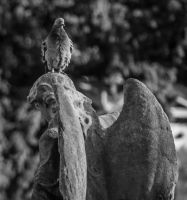 West Brompton Cemetary 4 by Elfsire
