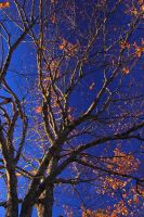 Branches of Blue Gold - 7903 by utoks