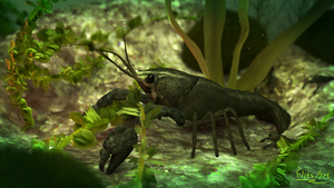 Crayfish (updated version) by FlitsArt
