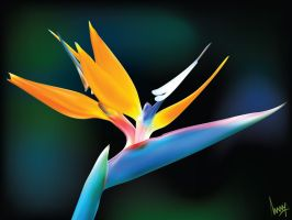 Heliconia Vector by ANOOOP