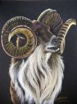 Bighorn Ram Prismacolor 1 by HouseofChabrier