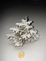 Snow Covered Tree + Candle by FantasyStock