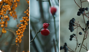 Winter Berries by Camomelle