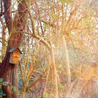 the house of light by Julietsound