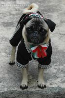Mexican Pug by Gismonda999