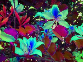 Glowing Orchids by Scientific-Fantasies