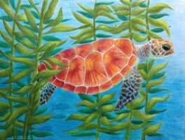 Turtle by King-Radium