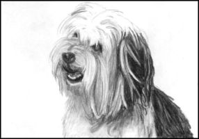 The dog 'Paul Anka' by kitsunegari16