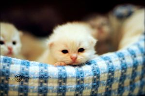 MY Baby Kitty by SilentPain0