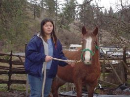 My 1st horse 2 by Cars2fangirl