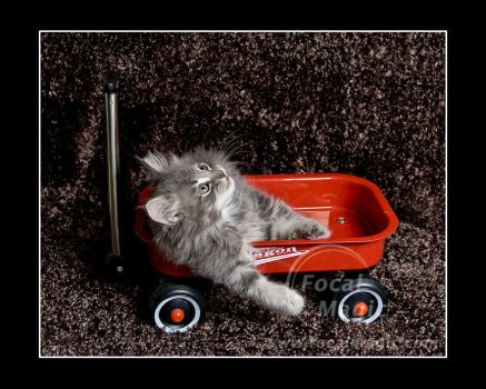 Little Red Wagon 2 by NicoleSlaughter