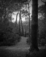 wooded walk by awjay