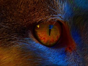 Colorful Eye by iVennex