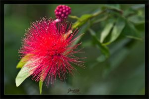Some kind of nice flower by deaconfrost78