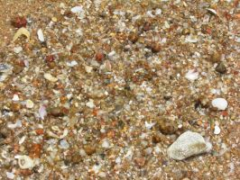 Sand and Shells by kellz-bellz