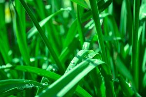 Water Drops on Leaves by GlaedrTheDragon