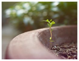 growth ii by ebengkid
