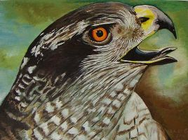 Hawk in acrylic part two by dutchway