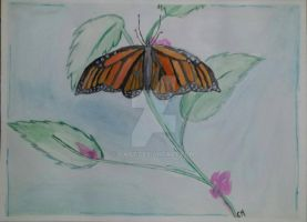 Monarch Butterfly  by Gail7
