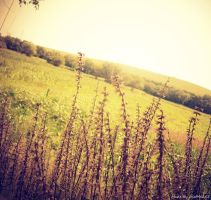 Summer field by JustMe255