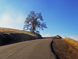 Bend in the Road by Swolf330