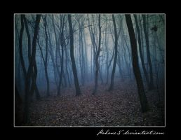 Forest in the fog I by kohone5