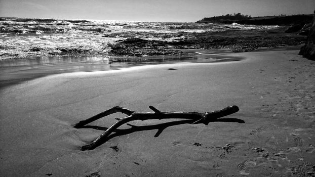 Driftwood 2 by sethses1