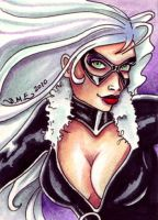Black Cat sketchcard by tavington