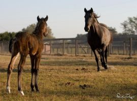 Lusitano Mother by Deirdre-T