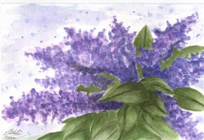 Aquarelle Flowers by Michelle114